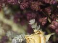 el-bouquet-s1_0181