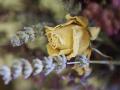 el-bouquet-s1_0176