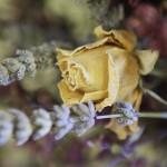 El Bouquet S1_0176