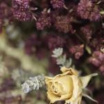 El Bouquet S1_0181